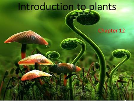 Introduction to plants Chapter 12 Warm up How many types of plants do you know? Can you name them.