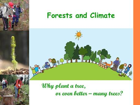 Forests and Climate Why plant a tree, or even better – many trees?