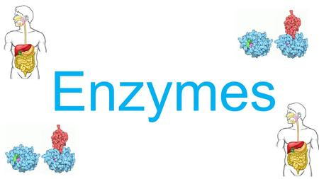 internal assessment on enzymes Issuu is a digital publishing platform that makes it simple to publish magazines, catalogs, newspapers, books, and more online  internal assessment - rate of reaction research question how.
