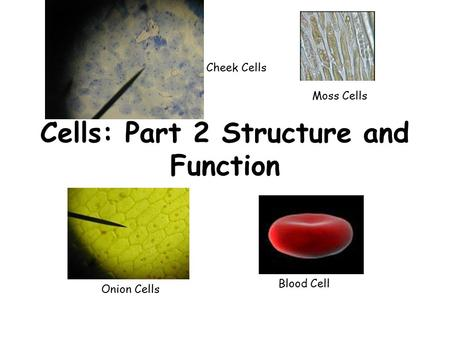 Cells: Part 2 Structure and Function Moss Cells Blood Cell Cheek Cells Onion Cells.