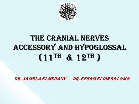 The Cranial Nerves accessory and hypoglossal (11 th & 12 th ) Dr. Jamela Elmedany Dr. Essam Eldin Salama.