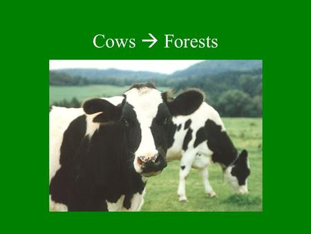 Cows  Forests. Shift from sheep to cows contributed to reforestation & current VT landscape Cows fall over steep slopes are spared Cows are hard work.