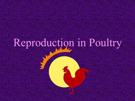 Reproduction in Poultry Different from mammals young are not carried in the hens body develop inside a fertilized egg outside the hens body.