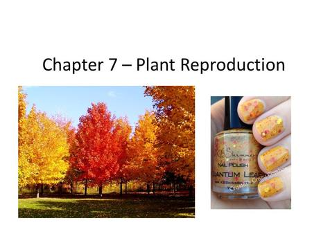Chapter 7 – Plant Reproduction. Plants come in a variety of shapes, sizes, and colors. ALL REPRODUCE ____________ or ____________.