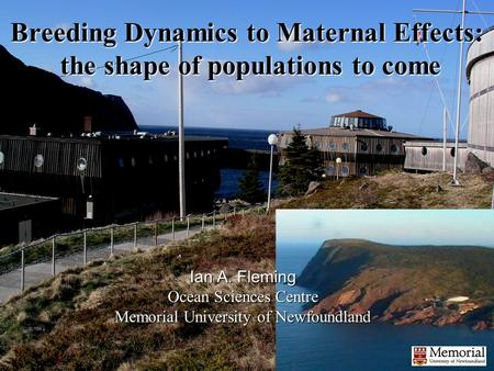 Breeding Dynamics to Maternal Effects: the shape of populations to come Ian A. Fleming Ocean Sciences Centre Memorial University of Newfoundland.