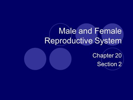 Male and Female Reproductive System Chapter 20 Section 2.