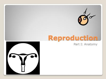 Reproduction Part I: Anatomy. Functions Overall: to produce offspring Male System: to produce & deliver sperm Female System: produce eggs, provide place.