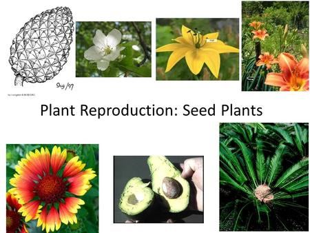 Plant Reproduction: Seed Plants. Table of Contents DateAssignmentVocabularyPage 11/28/12Seed Plants10.
