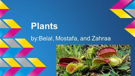 Plants by:Belal, Mostafa, and Zahraa. What is a Plant Plant's are living things.