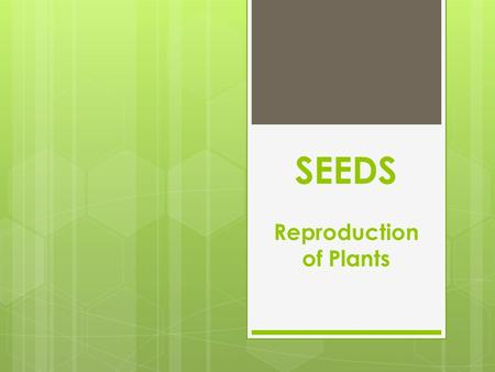 SEEDS Reproduction of Plants. Parts of a Seed 1) Seed Coat 2) Cotyledon 3) Food Storage.