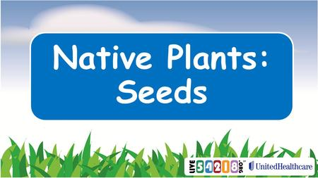 Native Plants: Seeds. How do seeds travel? ? How do people travel? Bike Boat Bus CarPlaneBy Foot.