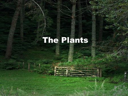 The Plants. The Origin of Plants Plants are believed to have originated on the Earth about half a billion years ago. They evolved from early algal ancestors.