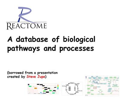 A database of biological pathways and processes (borrowed from a presentation created by Steve Jupe)