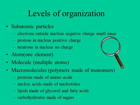 Levels of organization Subatomic particles –electrons outside nucleus negative charge small mass –protons in nucleus positive charge –neutrons in nucleus.