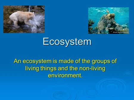 Ecosystem An ecosystem is made of the groups of living things and the non-living environment.