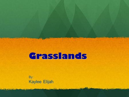 Grasslands By: Kaylee Elijah. Where are Grasslands? Grasslands are found on both sides of two desert belts. Grasslands are located in North America's.
