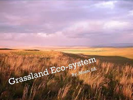 Grassland Eco-system By: Massi 6A. What is it? Grassland eco-system is an eco-system found in tropical areas near to the equator. A lot of plants and.
