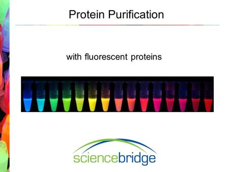 Protein Purification with fluorescent proteins. Laboratory Introduction What is a protocol?What is a protein? Why do scientists use protocols? Why would.