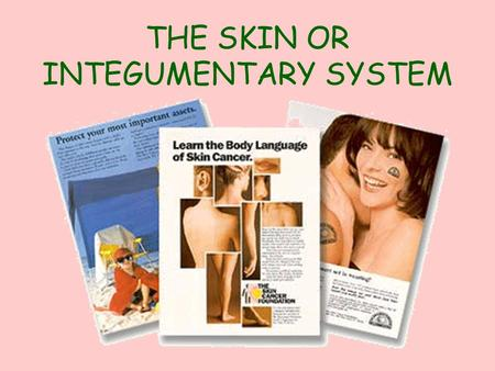 THE SKIN OR INTEGUMENTARY SYSTEM Remember the outer portion of the skin is an example of what type of tissue?