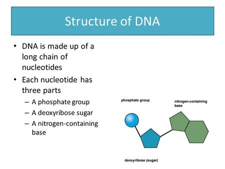 Structure of DNA DNA is made up of a long chain of nucleotides Each nucleotide has three parts – A phosphate group – A deoxyribose sugar – A nitrogen-containing.
