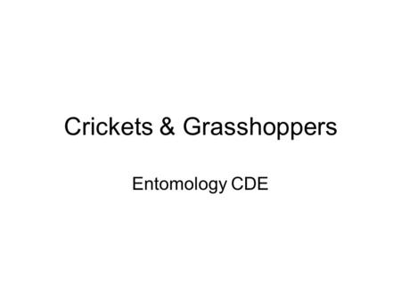 Crickets & Grasshoppers Entomology CDE. Order- Orthoptera Camel cricket Field cricket House cricket Differential grasshopper (short-horned) Long-horned.