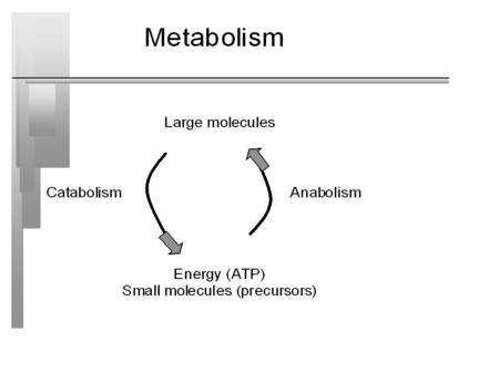 Biosynthesis of Macromolecules Anabolism - use energy (ATP) from catabolism - use carbon from sugars, lipids, proteins, or any other carbon source (xenobiotics)