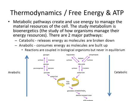 Thermodynamics / Free Energy & ATP Metabolic pathways create and use energy to manage the material resources of the cell. The study metabolism is bioenergetics.