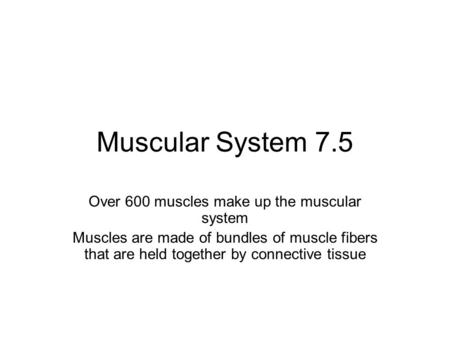 Muscular System 7.5 Over 600 muscles make up the muscular system Muscles are made of bundles of muscle fibers that are held together by connective tissue.