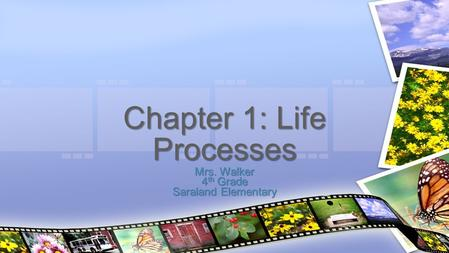 Mrs. Walker 4 th Grade Saraland Elementary Chapter 1: Life Processes.