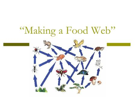 """Making a Food Web"". What is it all about? When you sit down for breakfast, lunch, or dinner the food you eat provides much needed energy that your body."