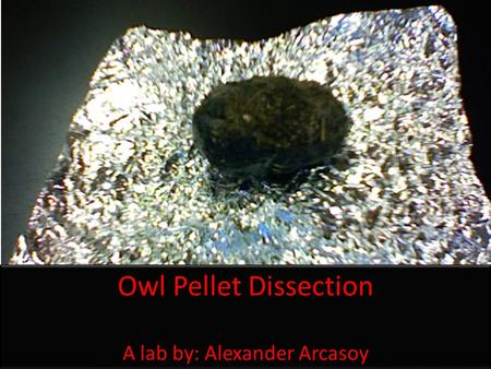 Owl Pellet Dissection A lab by: Alexander Arcasoy Owl Pellet Dissection A lab by: Alexander Arcasoy.