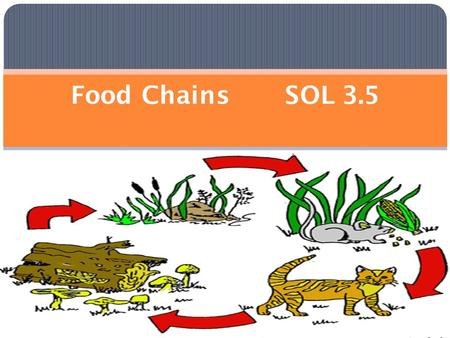 Food Chains SOL 3.5. A ___ _______shows a food relationship among plants and animals in a specific area or environment.