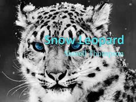 Snow Leopard Sherell Thompson.