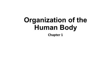 Organization of the Human Body Chapter 1. Anatomy and Physiology Anatomy = Structure Physiology = Function.