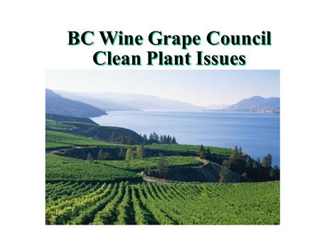 BC Wine Grape Council Clean Plant Issues Brief overview of BC Grape and Wine Sector Re-invented in 1989 Approx. 130 Wineries Approx 10,000 acres in wine.