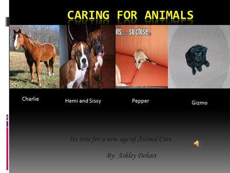 Its time for a new age of Animal Care By: Ashley Dehart Charlie Hemi and Sissy Pepper Gizmo.