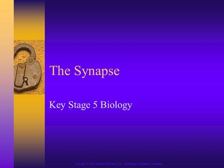 Copyright © 2004 Pearson Education, Inc., publishing as Benjamin Cummings The Synapse Key Stage 5 Biology.