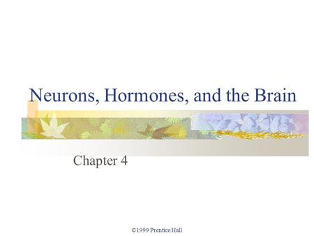 ©1999 Prentice Hall Neurons, Hormones, and the Brain Chapter 4.