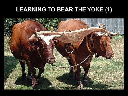 LEARNING TO BEAR THE YOKE (1). There are many valuable lessons to be learned from the Old Testament according to Rom 15:4 Jeremiah's words are very desperately.
