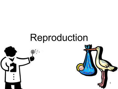 1 Reproduction. 2 Production of new individuals is a fundamental characteristic of a living species. Genetic information is passed on from parental generation.
