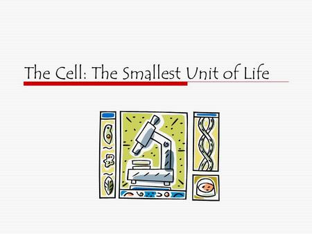The Cell: The Smallest Unit of Life Prokaryotic and Eukaryotic Cells  Prokaryotic 1.No nuclear membrane 2.No membrane bound organelles 3.Found only.