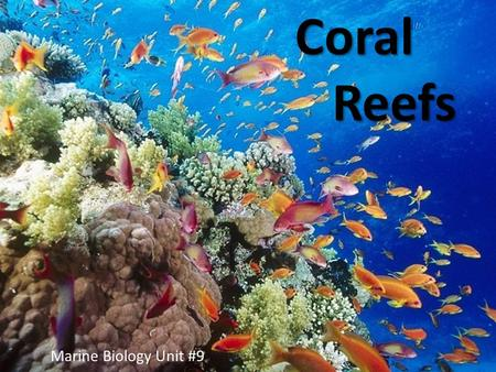 Coral Reefs Coral Reefs Marine Biology Unit #9. Introduction  Most complex & diverse ecosystem in our oceans  Not only biological, but geological 