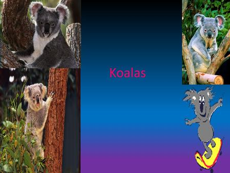 Koalas. What are Koala's The koala is a small bear-like, tree-dwelling, herbivorous marsupial which averages about 9kg in weight. Its fur is thick and.