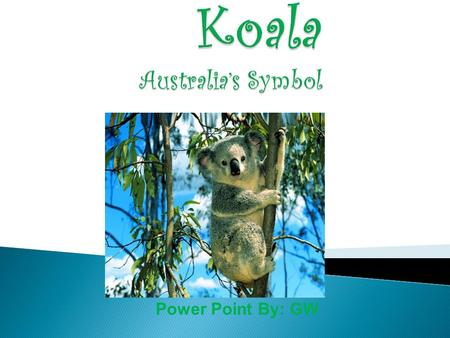 "Power Point By: GW. The name of my animal is Koala It's scientific name is ""Phascolarctos Cinerus"" meaning ""furry pouched gray bear"" in Latin It is a."