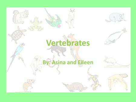 Vertebrates By: Asina and Eileen About Vertebrates Vertebrates are animals that have backbones such as mammals, fish, amphibians, birds, primates, rodents.