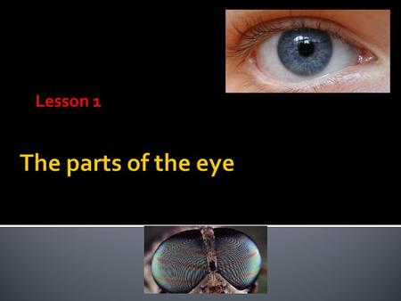Lesson 1. IRIS  colored part of the eye  controls the amount of light entering, which changes the size of the pupil 
