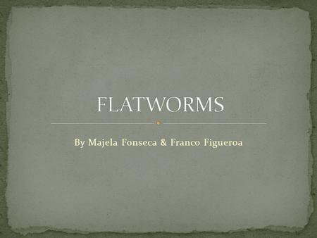 By Majela Fonseca & Franco Figueroa. The flatworms are scientifically known as Platyhelminthes or Plathelminthes. From the worms group, flatworms are.