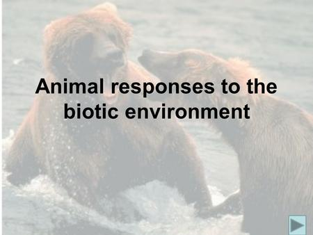 Animal responses to the biotic environment. Intraspecific aggressive responses Aggression is belligerent behaviour that arises from competition. One animal.