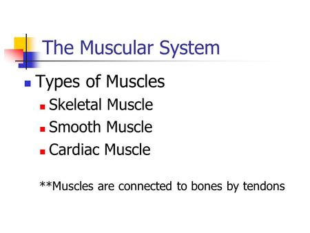 The Muscular System Types of Muscles Skeletal Muscle Smooth Muscle Cardiac Muscle **Muscles are connected to bones by tendons.