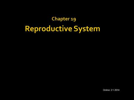 Chapter 19 Reproductive System